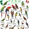 TIP - Peru field guides