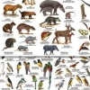 NatureScanner - Field Guides