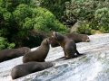 Milford Sound wildlife