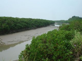 Afbeelding voor Tamsui River Mangrove Conservation Area