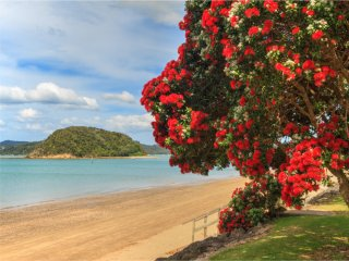 Afbeelding voor Bay of Islands