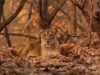 Afbeelding voor Gir National Park in India